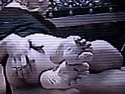Мастурбацыя кисы перед вебкамерой