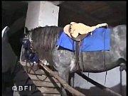 Δωρεάν λήψη xxx επιρρεπείς hd βίντεο καυλωμένη ficksau κρανίο doganimalxvideo πορνό beeg fusy bidio πλήρες πρώτη vedvo free images